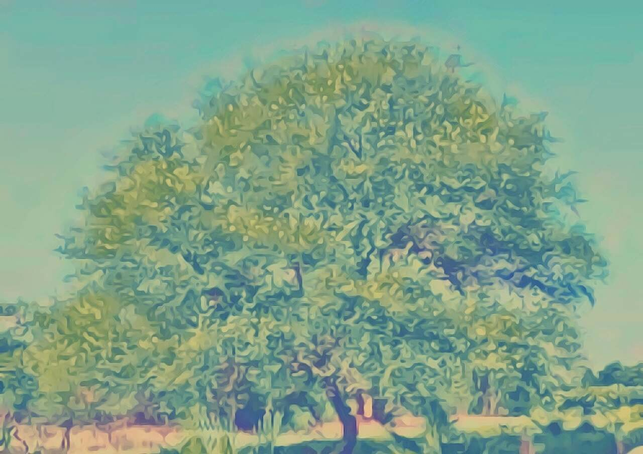 Babooltree