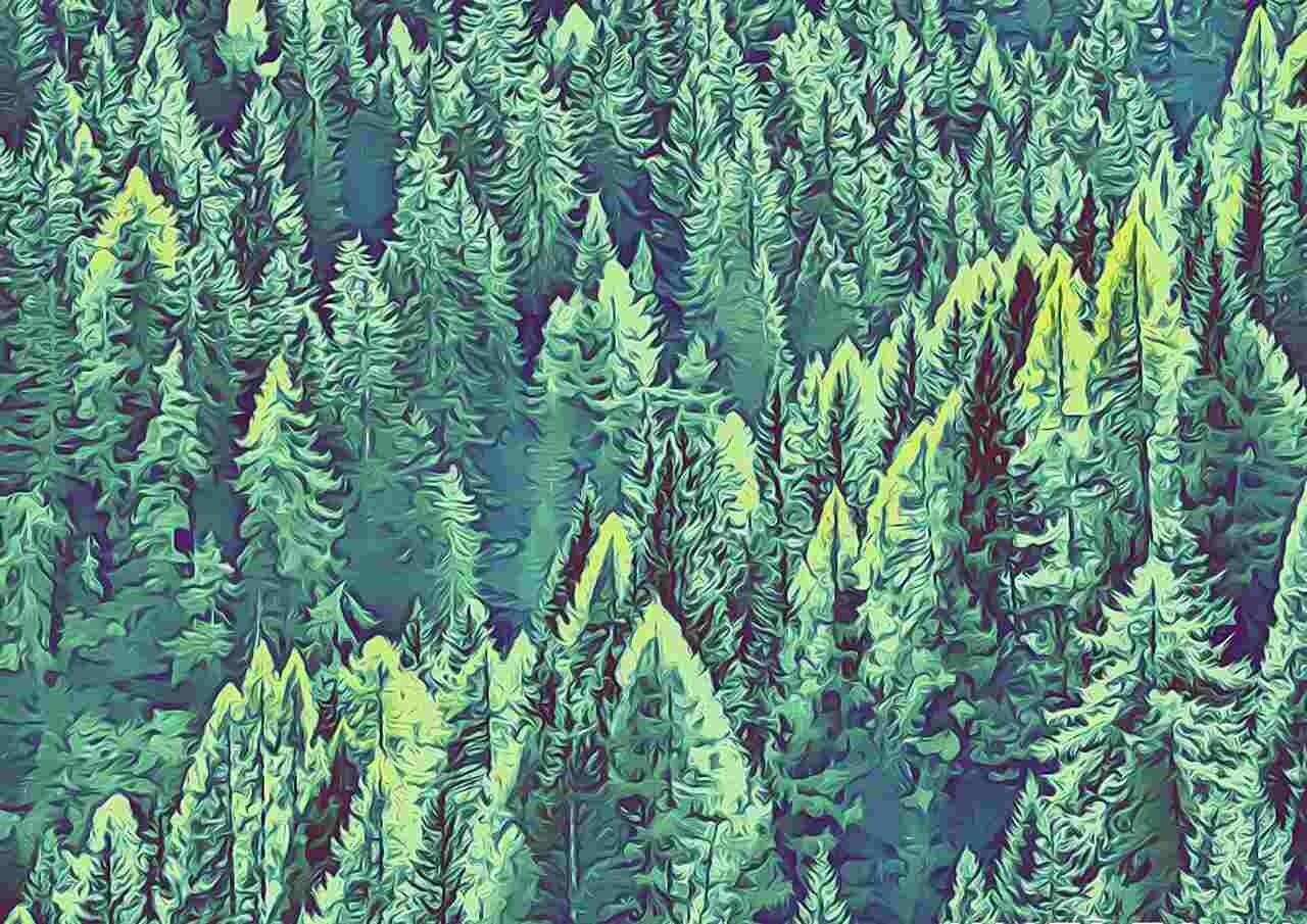 Lohgerbung Lohwälder Gusti Leder