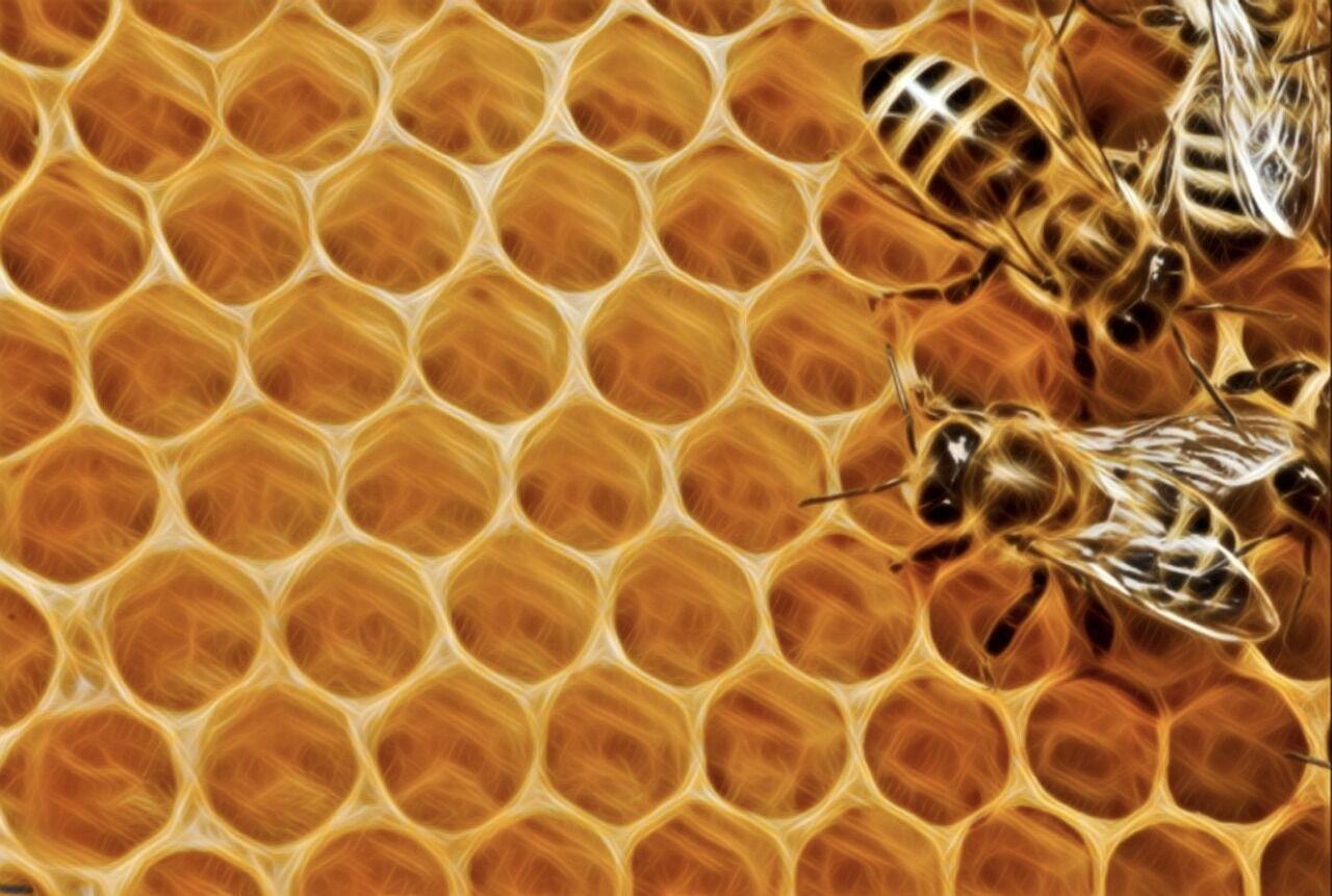 Bienenwachs Gusti Leder